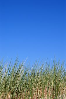 Free Grass And Sky Stock Images - 5623114