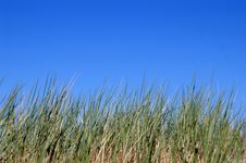 Free Green Grass And Sky Stock Photo - 5623150