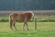 Free Horse Stock Photography - 5623312