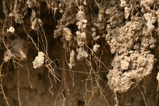 Texture Of Dirt With Roots Stock Photos