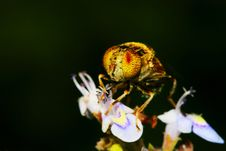 Free The Fly And Flower Royalty Free Stock Photos - 5624358