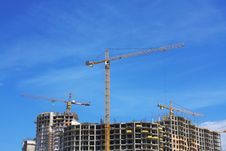 Free Cranes On Sandy I Protect Under The Blue Sky Stock Photography - 5625142