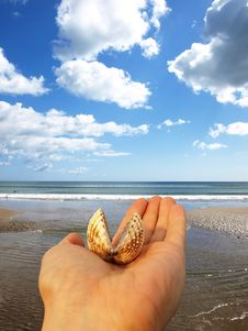 Free Shell On Hand Stock Image - 5625291
