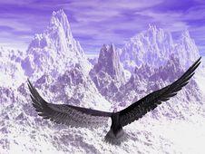 Free Eagle Royalty Free Stock Photos - 5625938