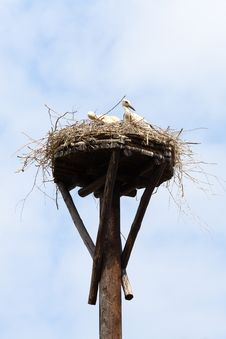 Free Two Young Storks Royalty Free Stock Images - 5626079