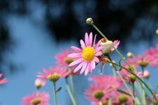 Free Red Eyed Tree Frog Royalty Free Stock Image - 5626306