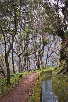 Free Walk On Madeira Island Stock Photo - 5626660