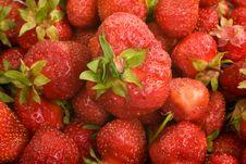 Free Strawberries Royalty Free Stock Photo - 5626825