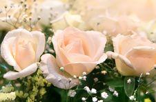 Free Pink Rose Royalty Free Stock Photo - 5629375