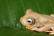 Free Frog On A Leaf Stock Image - 5629641