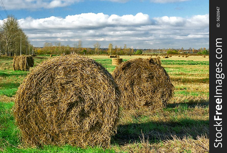 Intorted rolls of hay on the autumn field