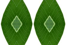 Free Idea Form Leaf. Stock Image - 56202251