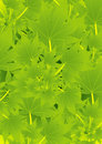 Free Green Leaves Background Royalty Free Stock Photos - 5631318