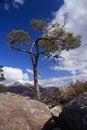 Free Boulder Tree Stock Photo - 5637710