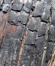 Free Burnt Tree Bark 3 Royalty Free Stock Photo - 5639525