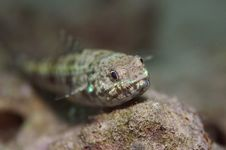 Free Lizard Fish Stock Images - 5630104
