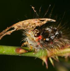 Free Caterpillar Royalty Free Stock Photo - 5630645