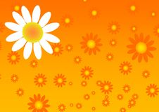 Free Sun Flower Background Stock Images - 5630704