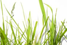 Free Green Grass Stock Image - 5630711