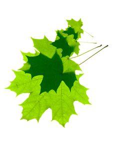 Free Leaves On White Stock Photo - 5630760