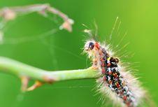 Free Caterpillar Royalty Free Stock Images - 5631049