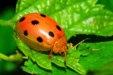 Free Bug On The Plant Stock Images - 5631164