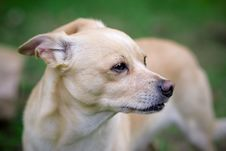 Dog - Portrait Stock Photography