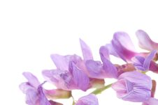 Free Beautiful Violet Flower Stock Photos - 5632453