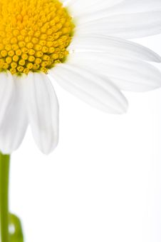 Free Closeup Macro Daisy Royalty Free Stock Images - 5632459