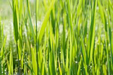 Free Green Grass Background Royalty Free Stock Photo - 5632625