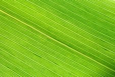 Free Green Leaf Vein Closeup Macro Royalty Free Stock Image - 5632716