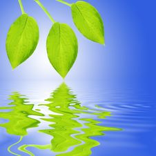 Free Green Leaf Reflection Stock Photo - 5632880