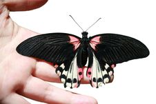 Butterfly On Hand Stock Photography