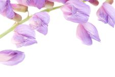 Free Macro Violet Flower Stock Photos - 5633053