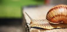 Free Snail Stock Photo - 5633250