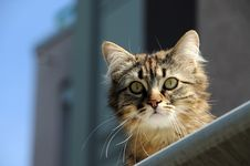 Free Curiouse Cat Royalty Free Stock Photography - 5634717