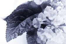 Free Macro Flower 2 Royalty Free Stock Photography - 5634807