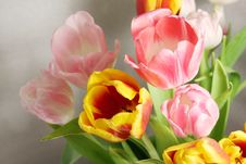 Free Tulips Stock Photography - 5636012