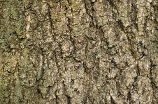 Free Tree Bark Stock Photography - 5636112