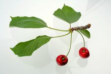 Free Green Sprig With Cherries Royalty Free Stock Photo - 5637575