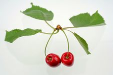 Free Green Sprig With Cherries Royalty Free Stock Photos - 5637778