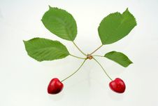 Free Green Sprig With Cherries Stock Photo - 5637810
