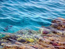 Coral Sandbank In Bay Sharm-el-Maya Stock Photo