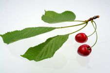 Free Green Sprig With Cherries Stock Photo - 5637890