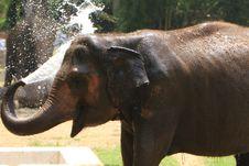 Free Elephant Royalty Free Stock Photo - 5638425