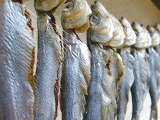 Free Fish Stock Image - 5638861