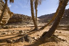 Free Small Oasis On Sahara Desert Royalty Free Stock Photo - 5638925