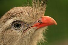 Free Portrait Of Hairy Bird Stock Photography - 5639242