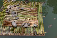 Free Tortoises Stock Photo - 5639320