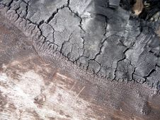 Free Burnt Tree Bark 6 Stock Photos - 5639623